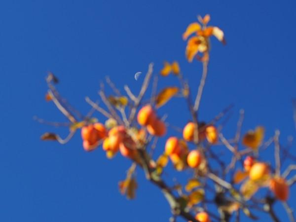 柿の木の上に月