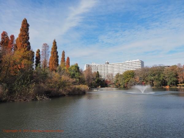 井の頭公園 七井橋から