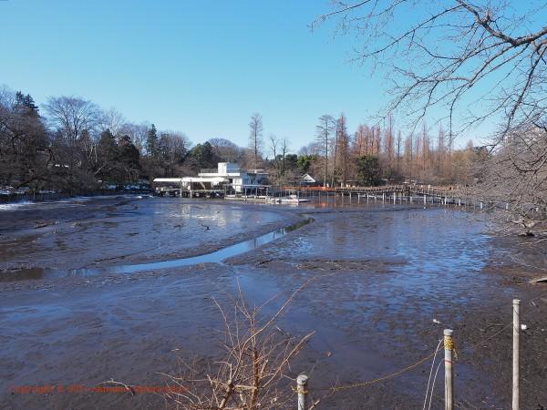 井の頭公園 七井橋