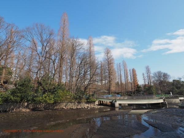 井の頭公園 水生園方面