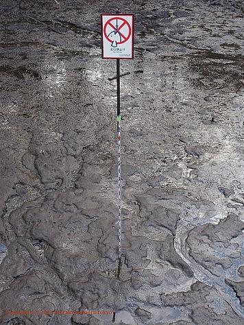 井の頭公園 弁天池