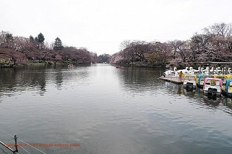 井の頭公園 ボート池